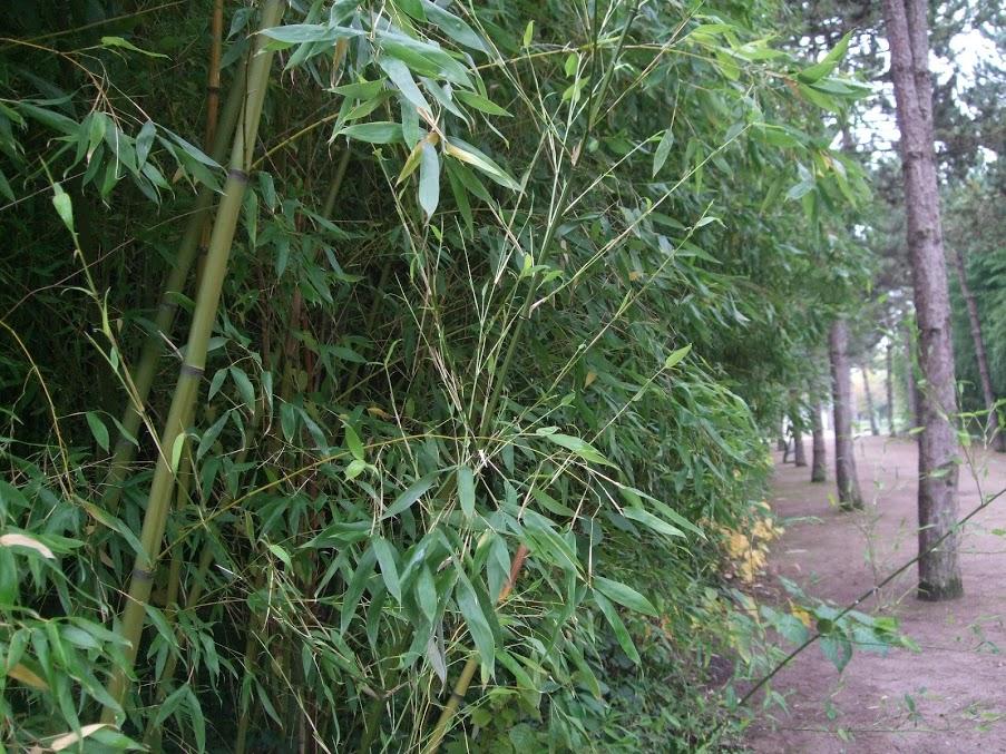 Bambouseraie jardin botanique yves rocher for Jardin yves rocher