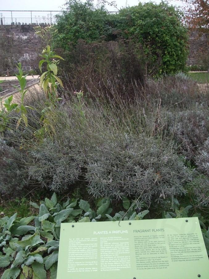 plantes à parfums yves rocher