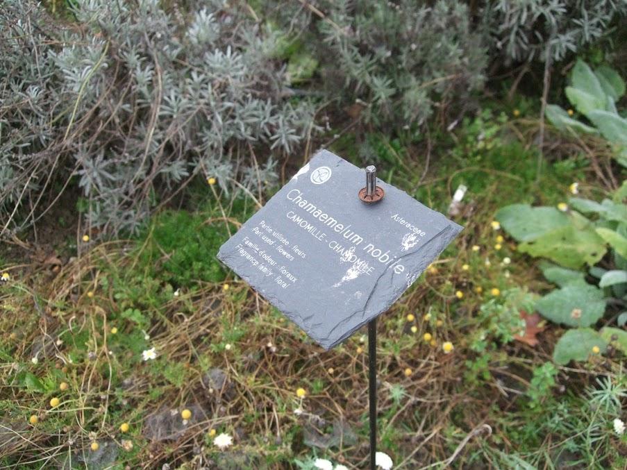 Jardin botanique yves rocher un pied dans les nuages for Jardin yves rocher