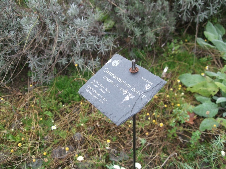 Jardin Botanique Yves rocher camomille