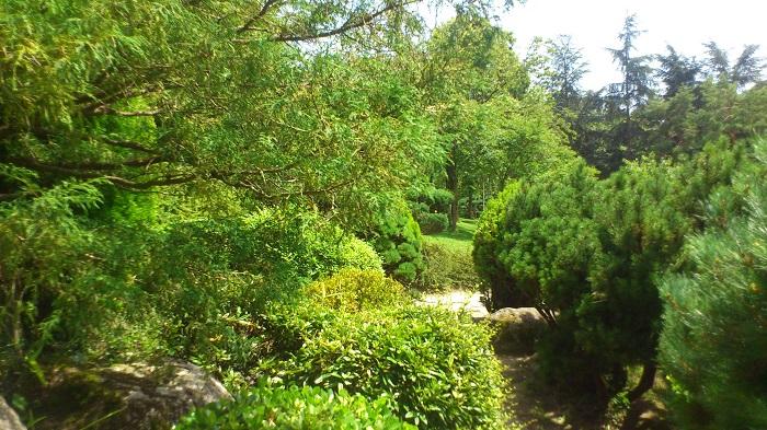 chemin jardin jap