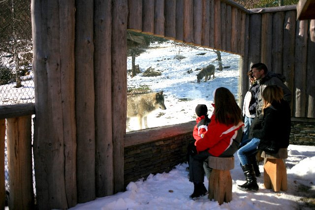 parc animalier des pyrénées cabane du trappeur