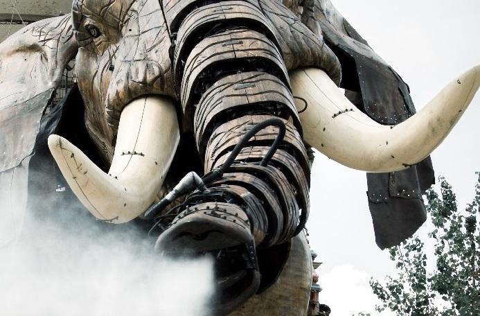 zoom elephant lvan