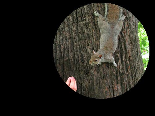 écureuils londres pinterest