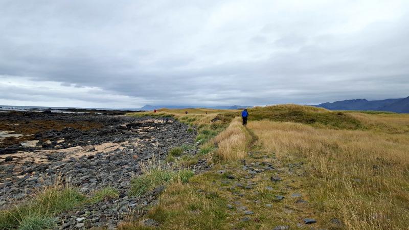 phoques-snaefellsness-islande