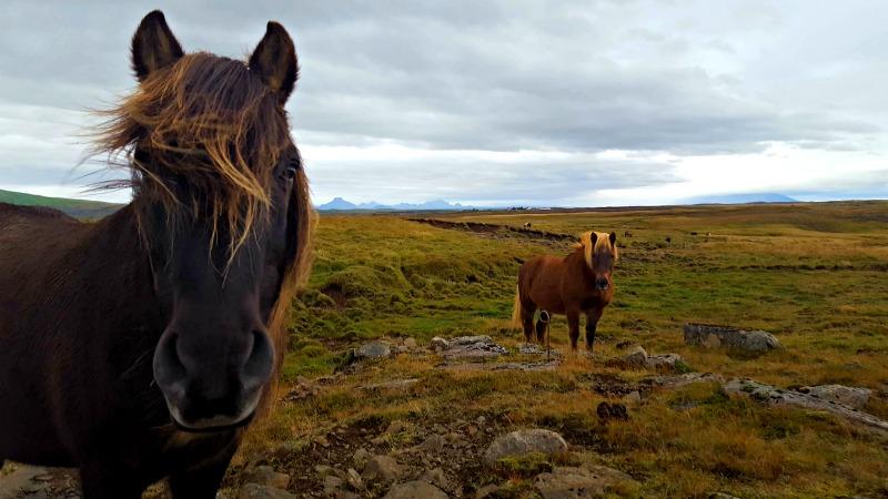 faire un road trip en islande
