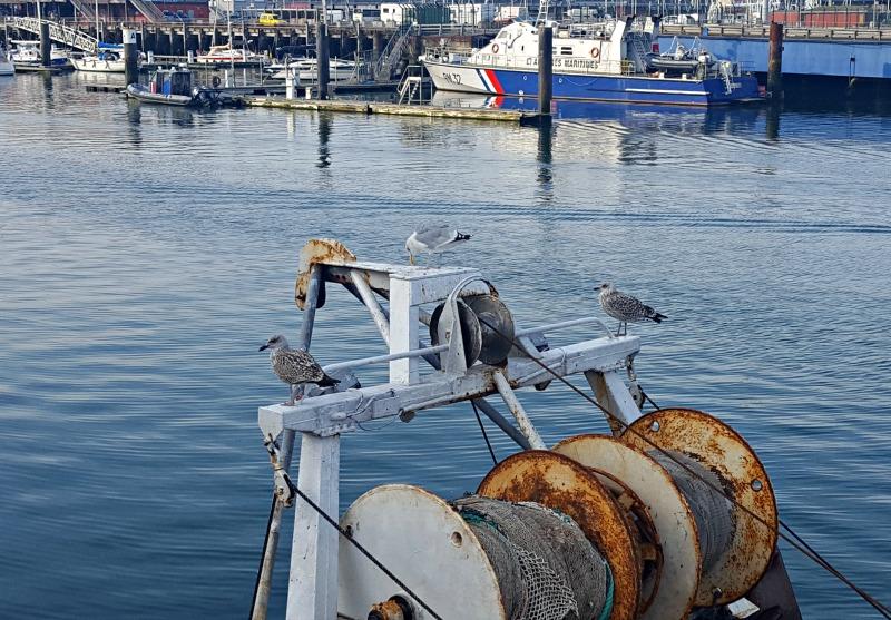 que faire à boulogne sur mer