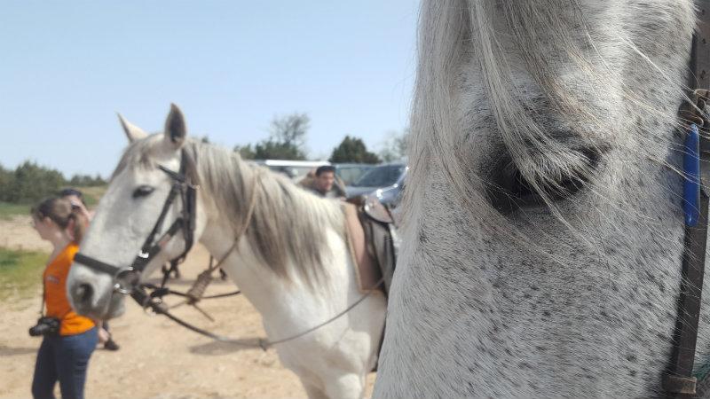 faire du cheval sur le larzac