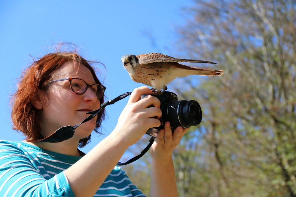 cours de fauconnerie faucon brionnais