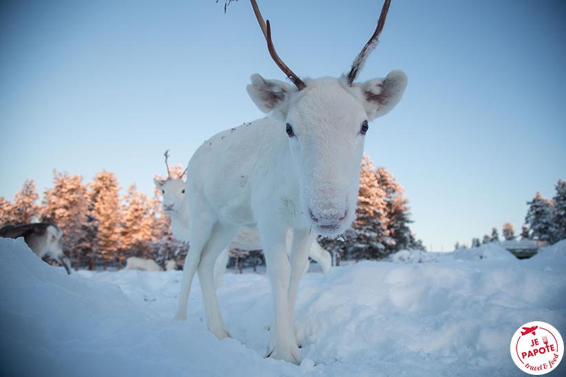 Voir rennes en finlande