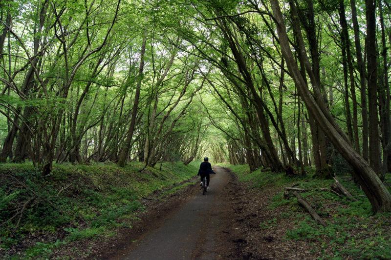 cuckoo trail polegate