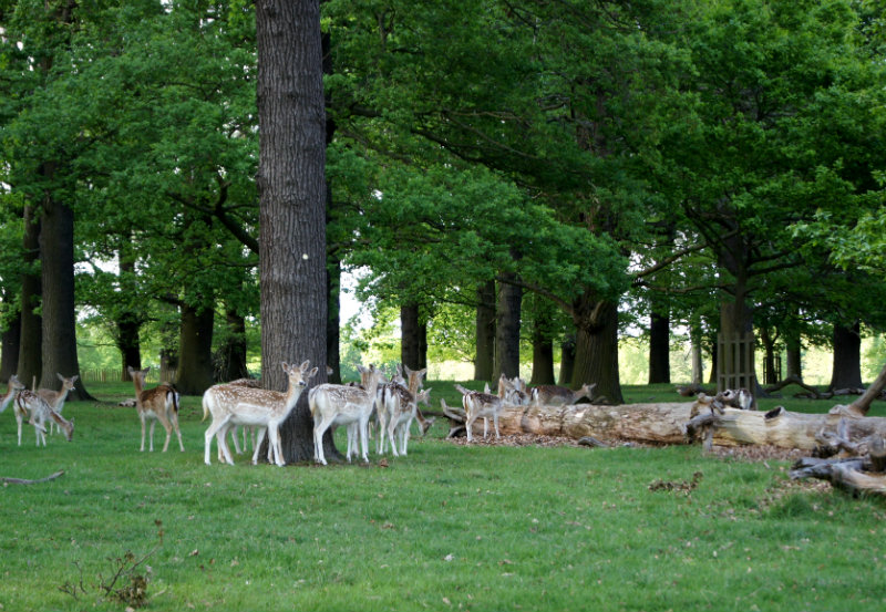 richmond park londres
