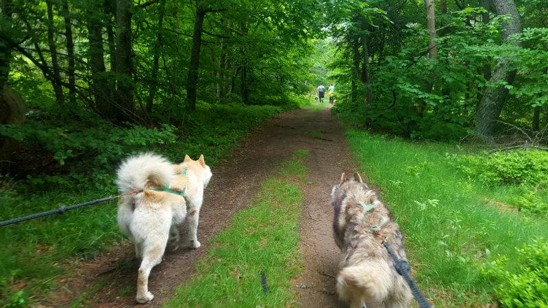 cani randonnée ardèche